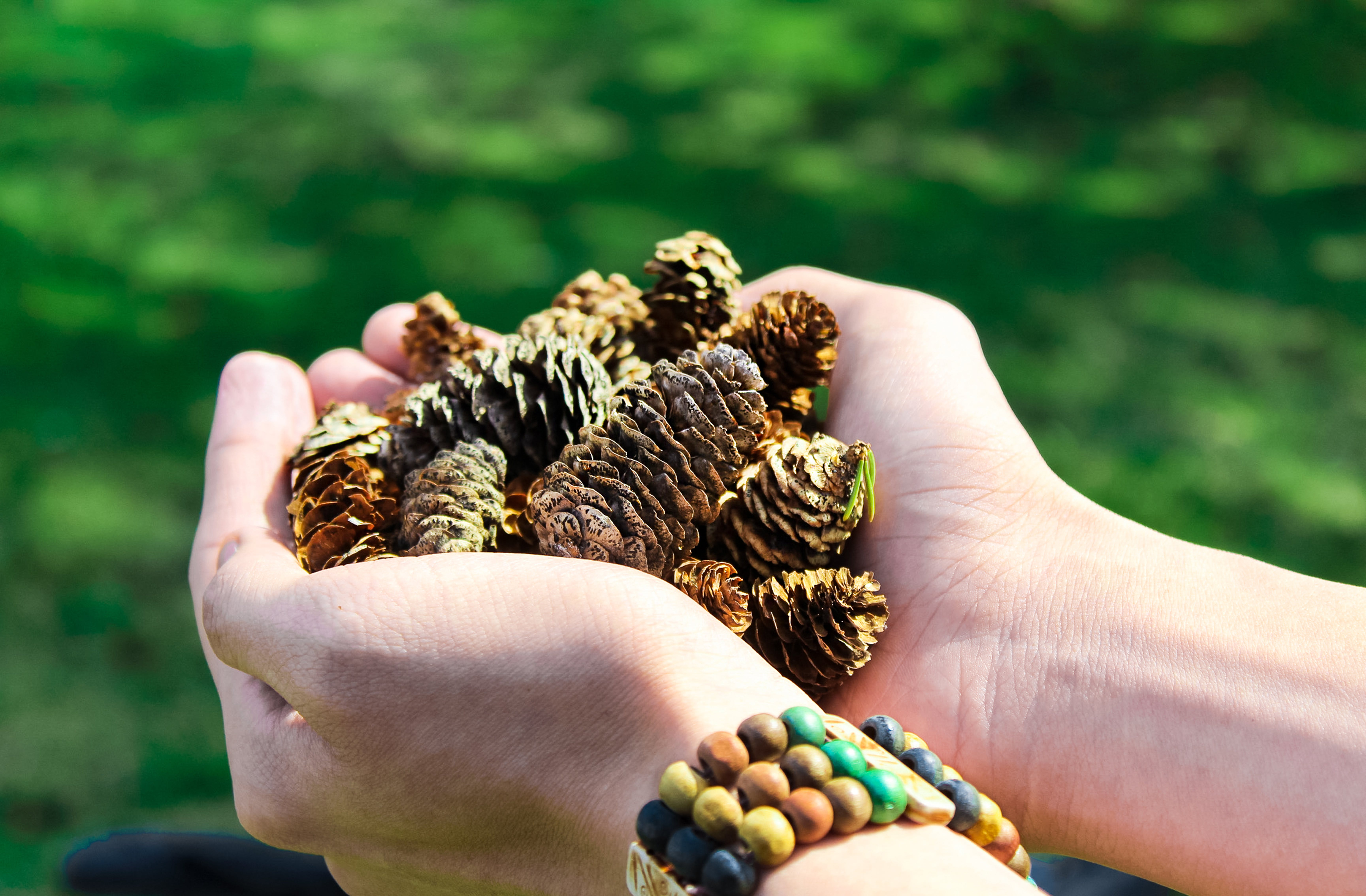 Close-Up Photo of Person Holding Pine Cones