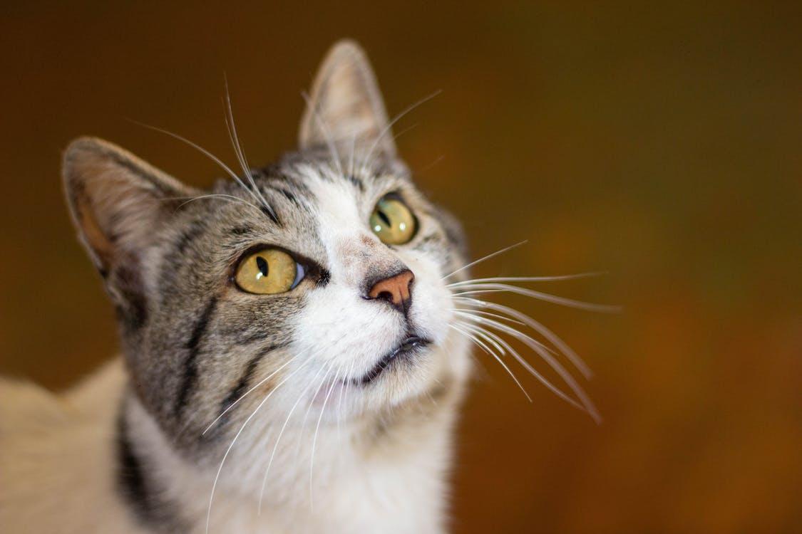 con mèo, con vật, loài vật