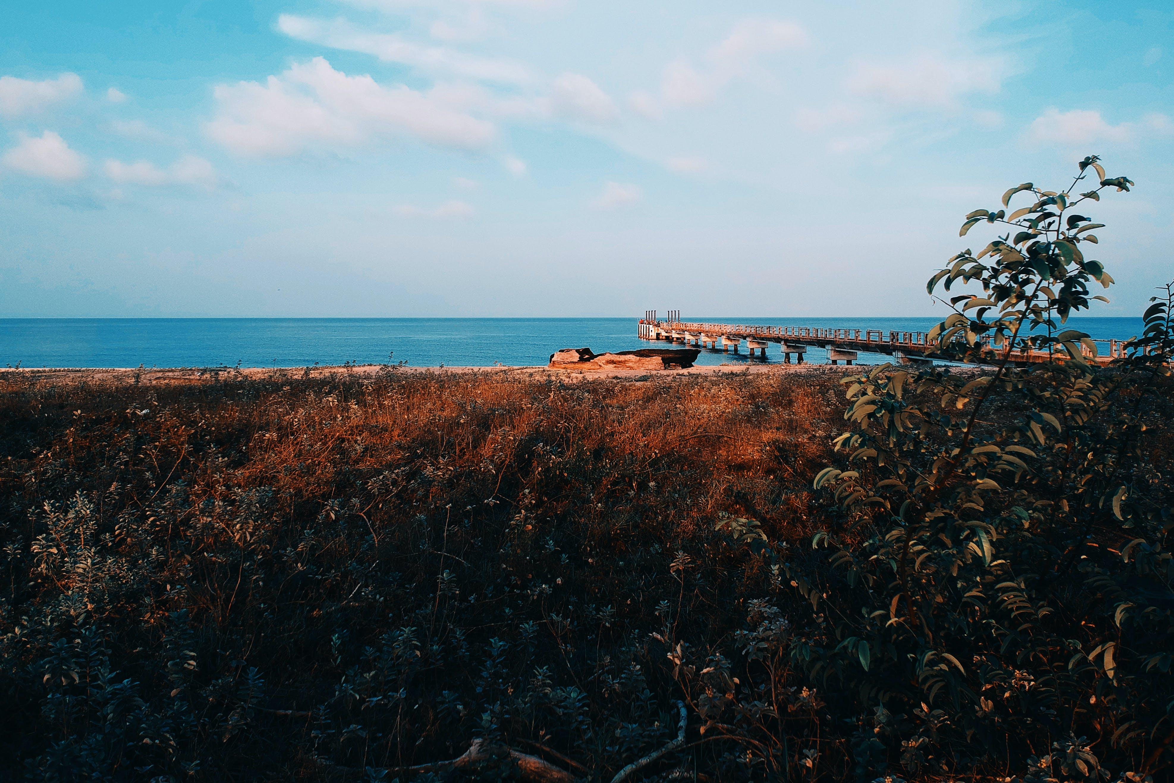 シースケープ, ドック, ビーチ, 日光の無料の写真素材