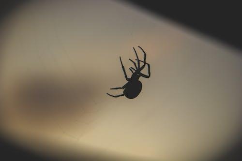 Free stock photo of dark, night, spider, spider's web