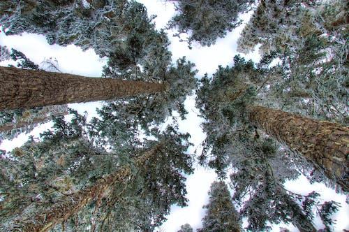 Kostenloses Stock Foto zu aussicht, bäume, baumrinde, baumstämme
