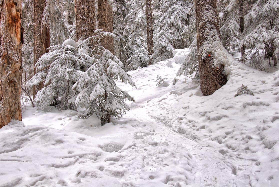 erdő, évszak, fagy