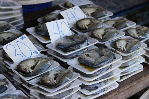 Gratis lagerfoto af fisk, fisk og skaldyr, tørret fisk
