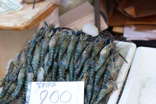 Gratis lagerfoto af fisk og skaldyr, rejer, 大头 虾