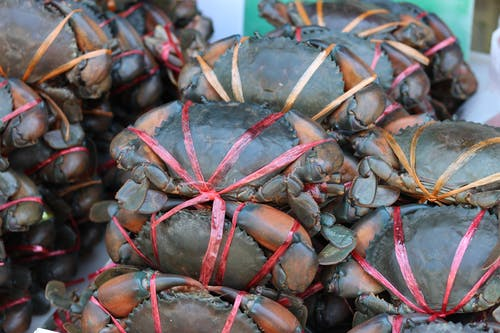 Gratis lagerfoto af fisk og skaldyr, krabbe, 螃蟹