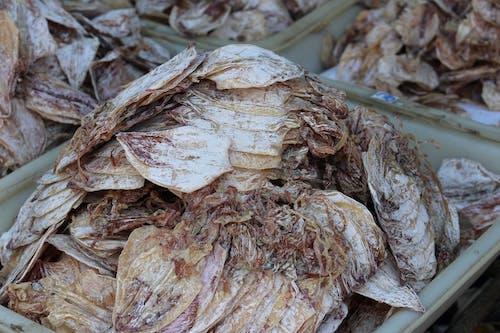 Gratis lagerfoto af fisk og skaldyr, tørret blæksprutte, 鱿鱼 干