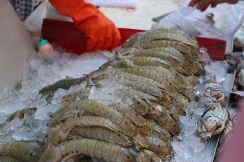Gratis lagerfoto af fisk og skaldyr, stomatopoda, 皮皮 虾, 虾 蛄
