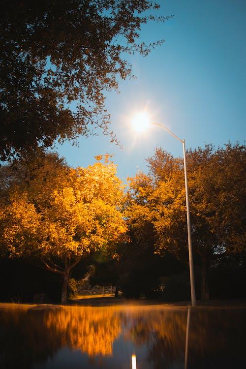 Gratis lagerfoto af farver, park, reflekterende, træer