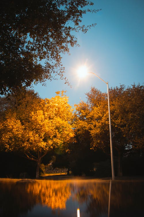 Foto stok gratis kebun, mencerminkan, pohon, warna