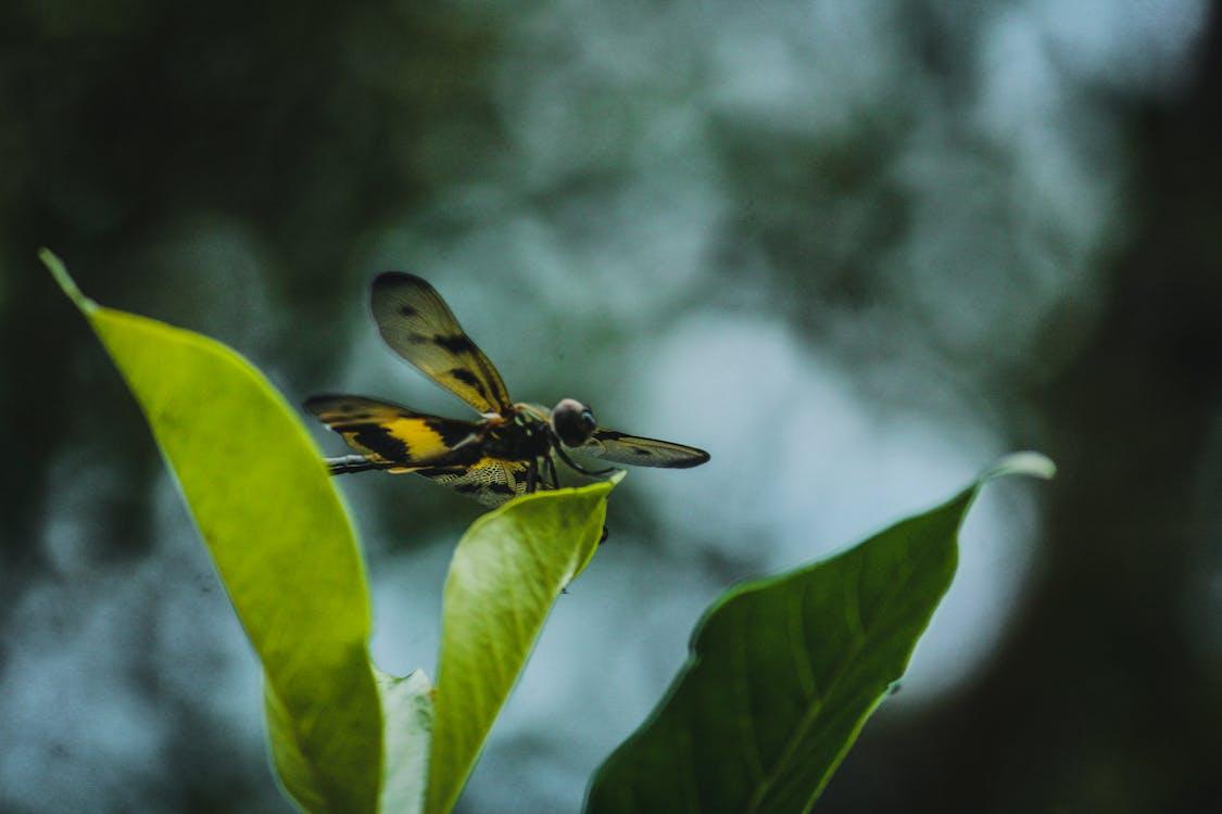 animais selvagens, ao ar livre, asas