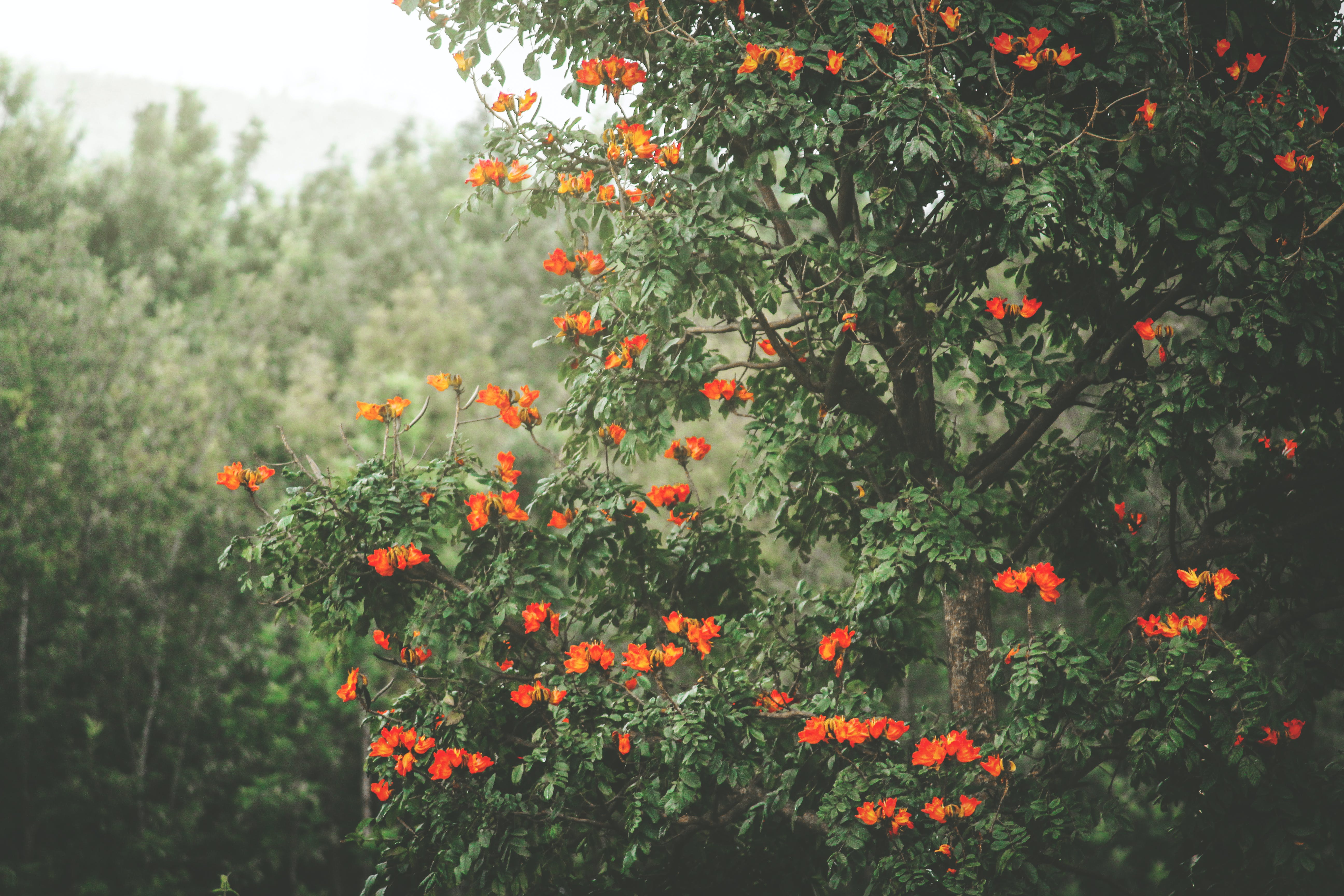 Photo of Tree With Flowers