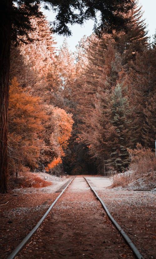 Gratis lagerfoto af edens have, efterårsfarver, jernbane, jernbanespor