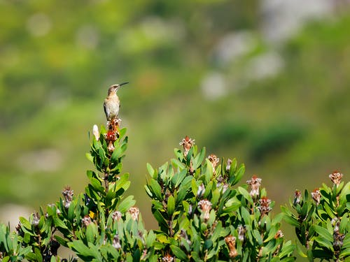 Selective Focus Photography Of Brown Humming Bird