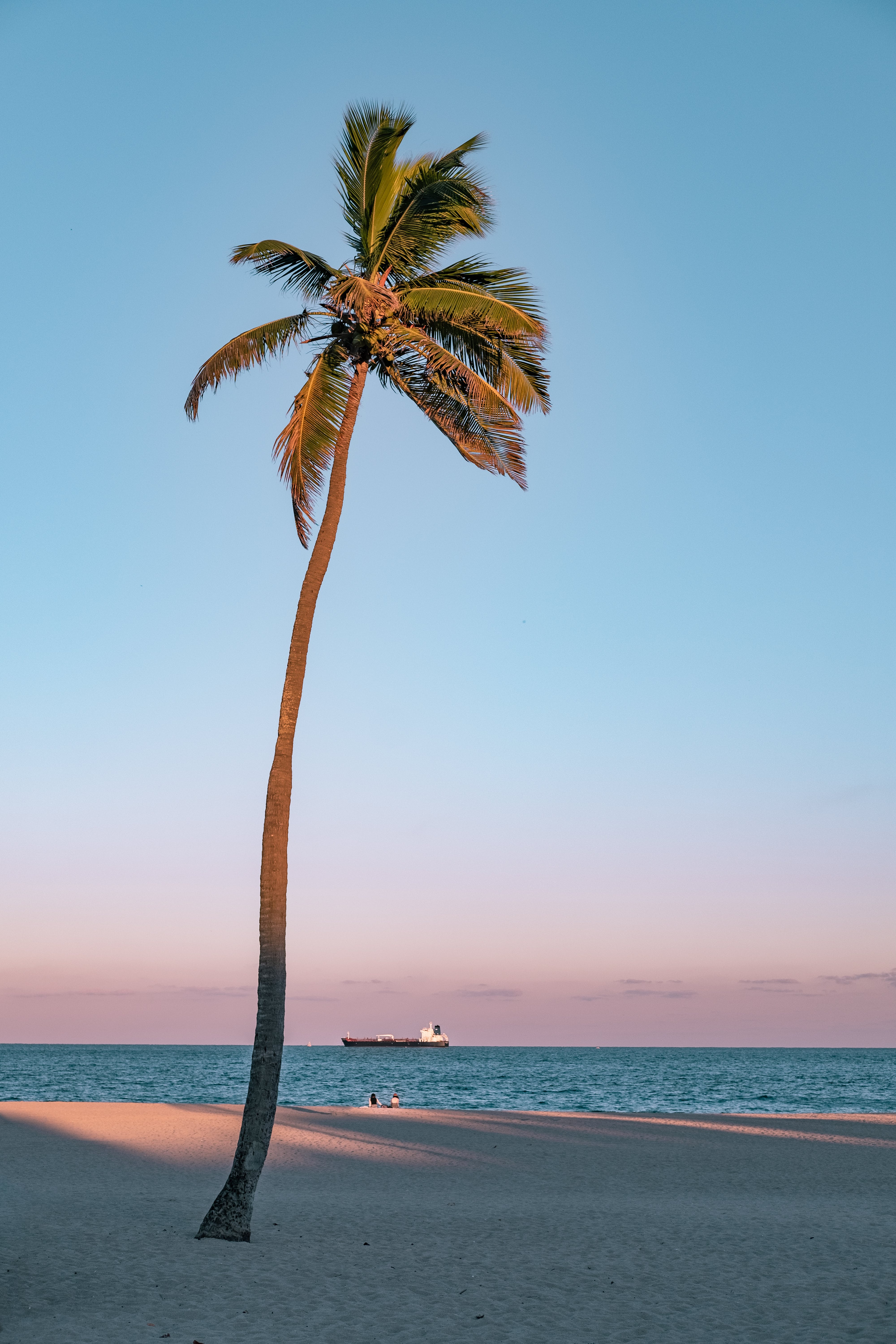 Photo of Coconut Tree On Seashore