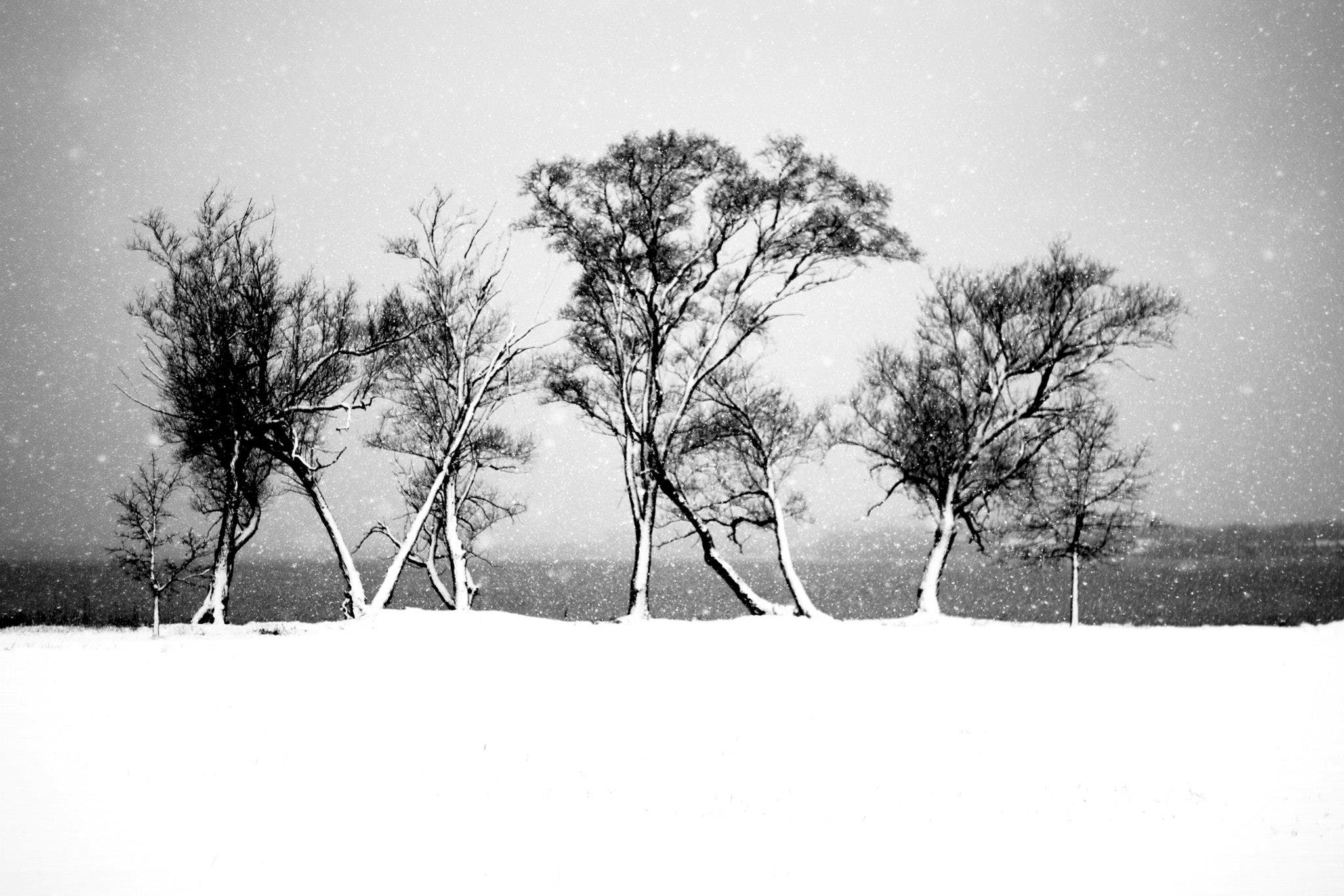 Free stock photo of black and white, lake, snow, snowing