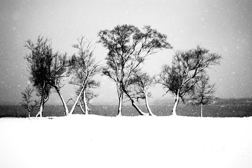 Free stock photo of black and white, snow, snowing, trees