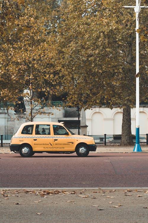 Fotos de stock gratuitas de arboles, asfalto, auto, automóvil