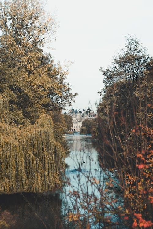dagslys, landskab, malerisk