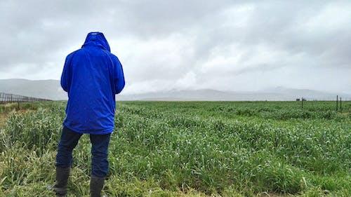 Foto stok gratis afrika selatan, basah, belakang, berawan