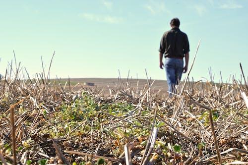 Foto stok gratis afrika selatan, belum tua, bidang, cerah