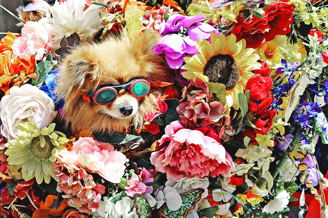 Dog Wearing Glasses Surrounded by Flowers
