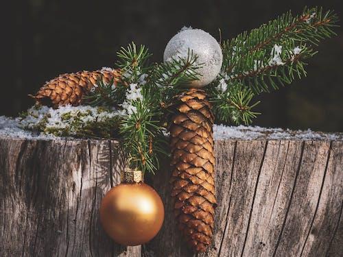 Imagine de stoc gratuită din anotimp, conifer, Crăciun, decor de Crăciun