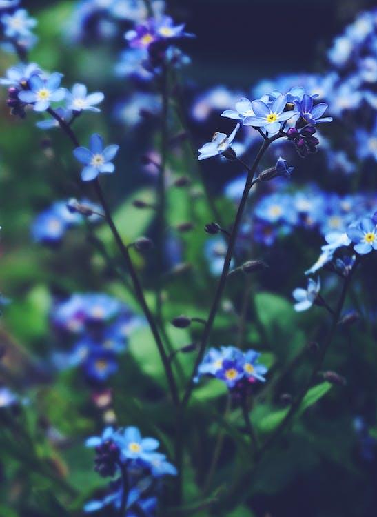 detailný záber, divý kvet, flóra