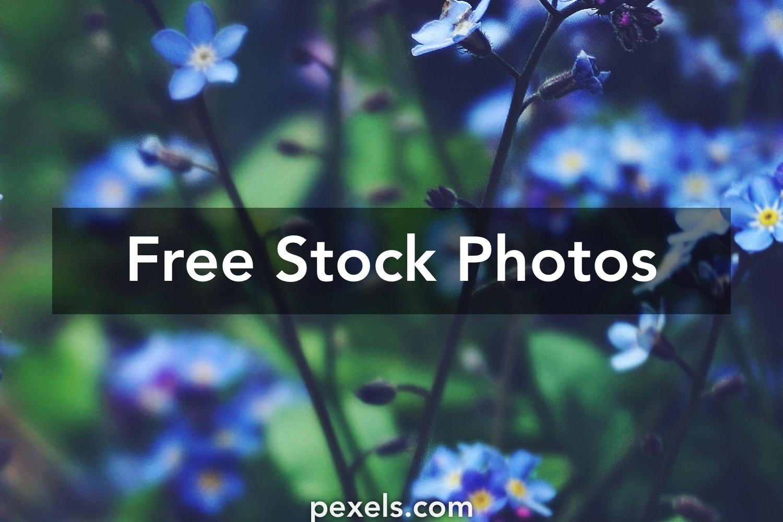 80 000 Best Blue Flowers Photos 100 Free Download Pexels Stock Photos