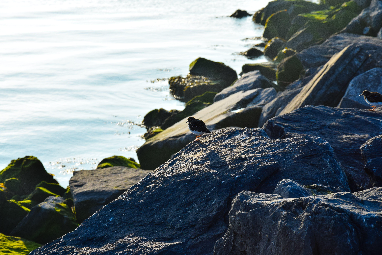 Free stock photo of bird, Mossy rocks, salt rocks, sea