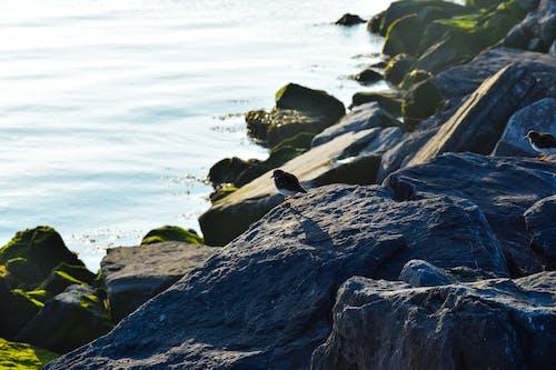 Free stock photo of mossy rocks, salt rocks, sea