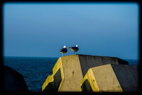 Imagine de stoc gratuită din litoral, mare, peisaj, pescăruș