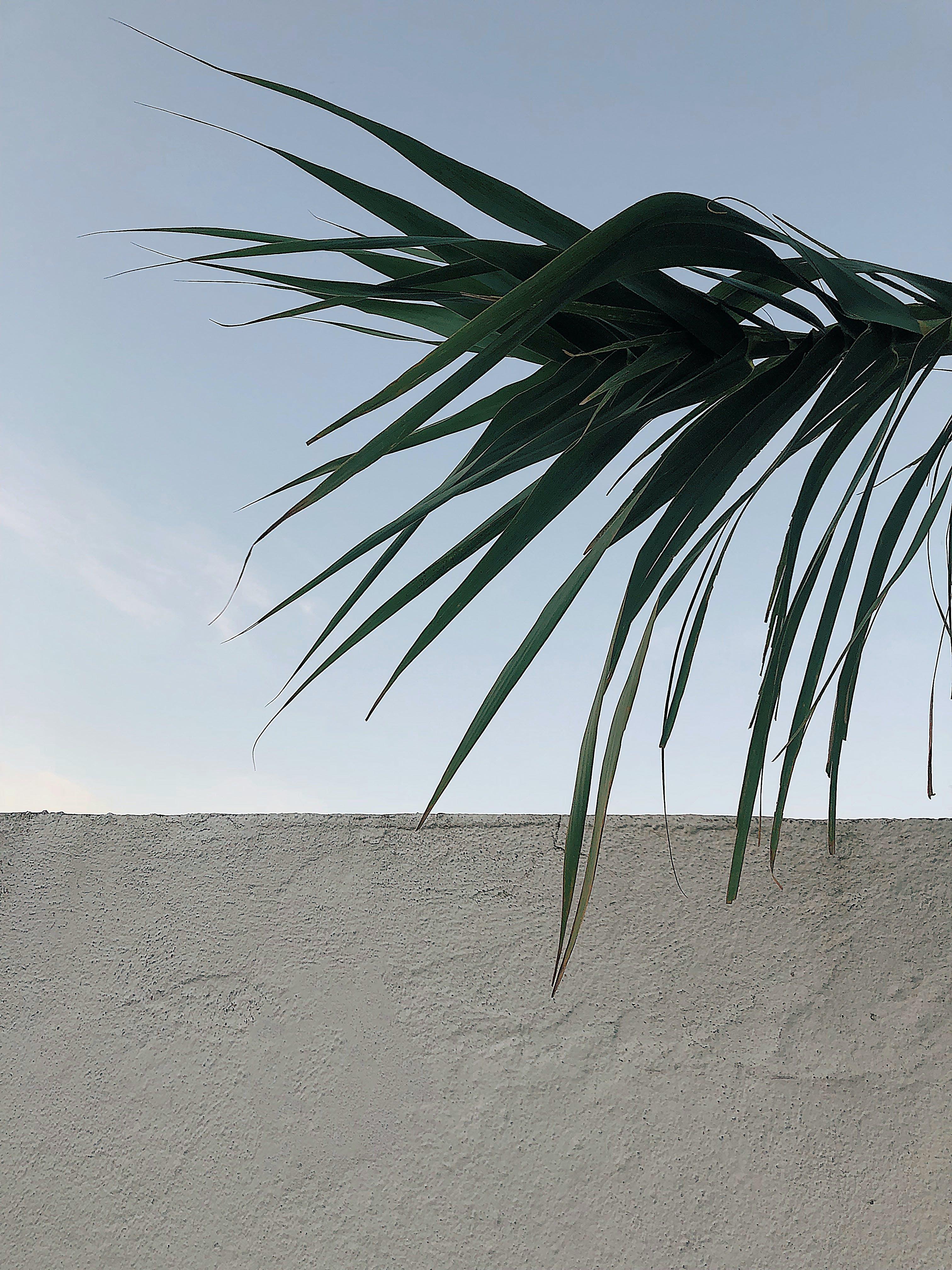 Green Palm Leaf over White Concrete