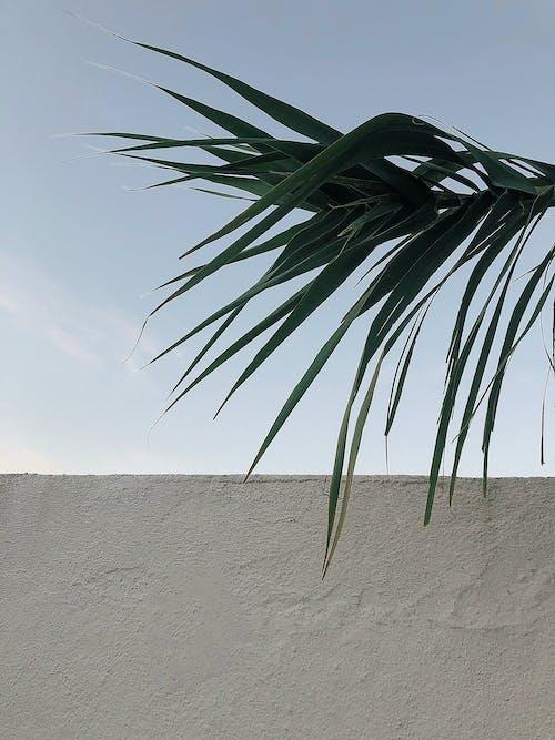 日光, 灰色混凝土, 牆壁, 雲 的 免费素材照片