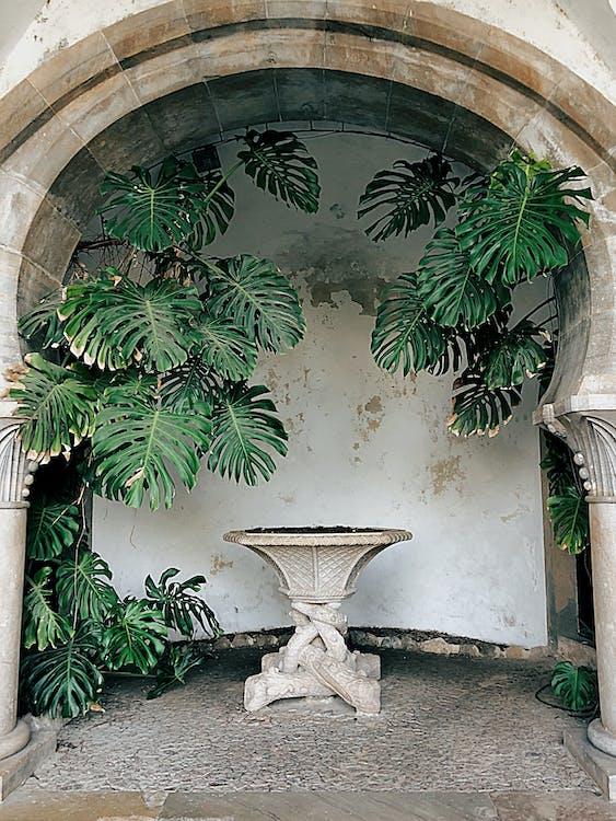 Round Gray Birdbath Beside Palm Tree
