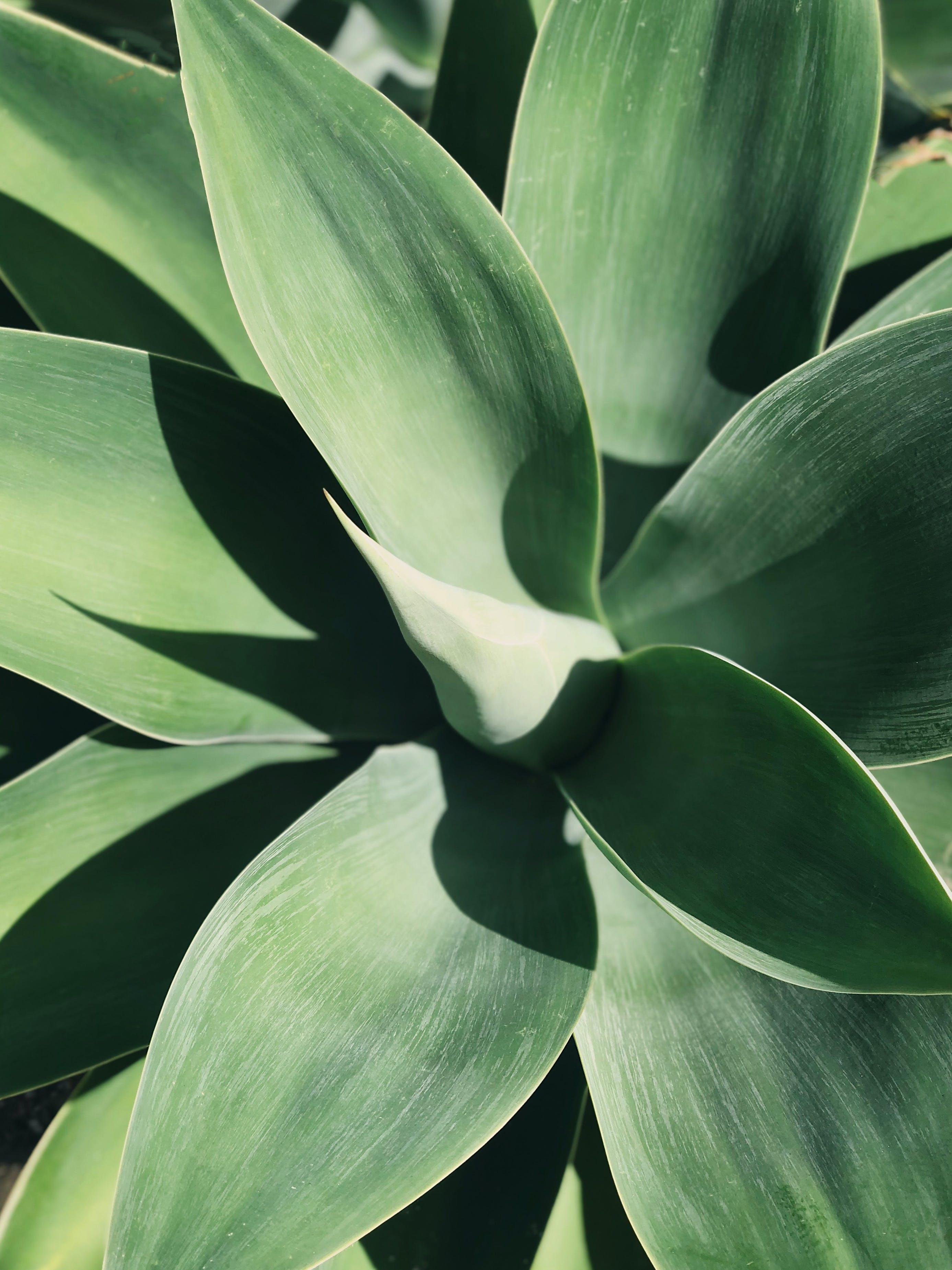 Безкоштовне стокове фото на тему «ботанічний, великий план, вирощувати, Денне світло»