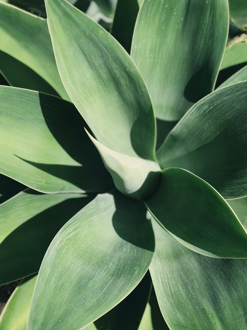 Top View Photo of Linear Green Leafed Plant