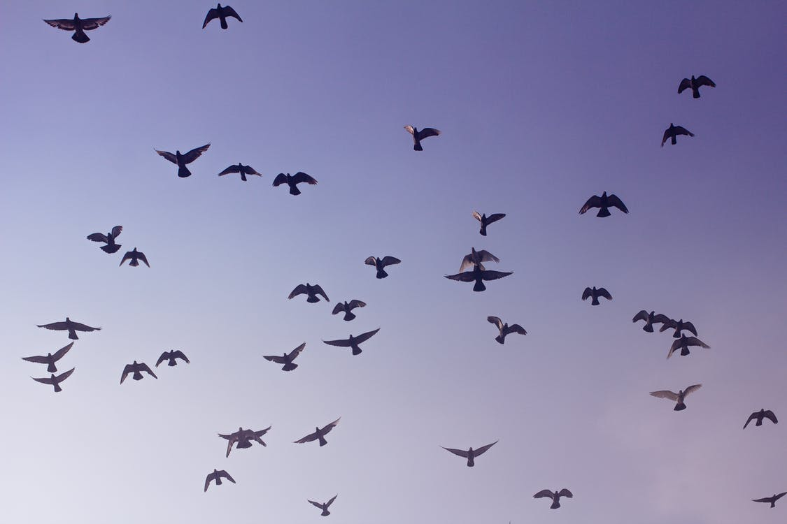 Low Angle Photography of Flock of Bird Flying