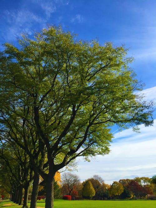 Free stock photo of park, subburbian park