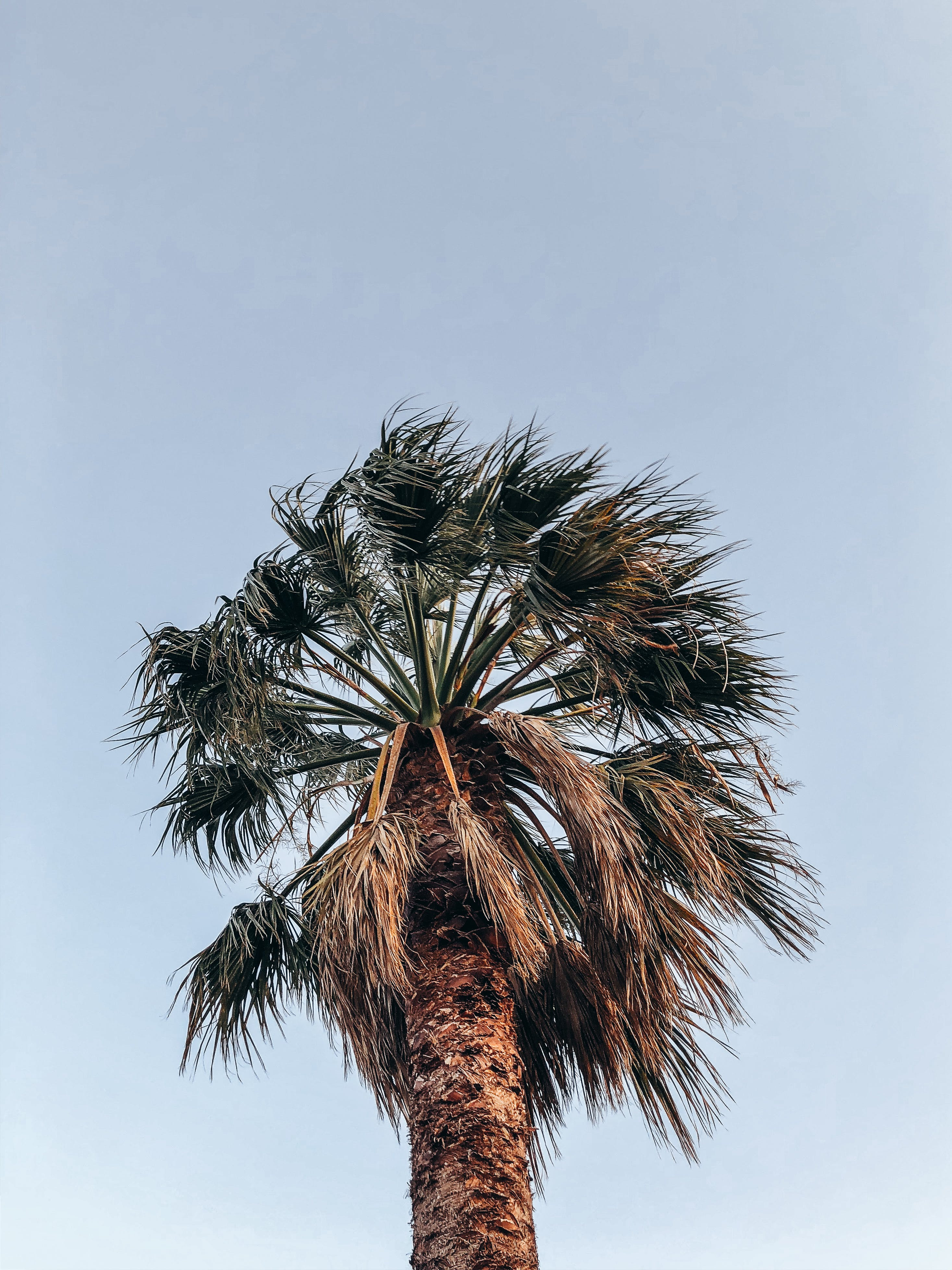 Low Angle Photo of Palm Tree