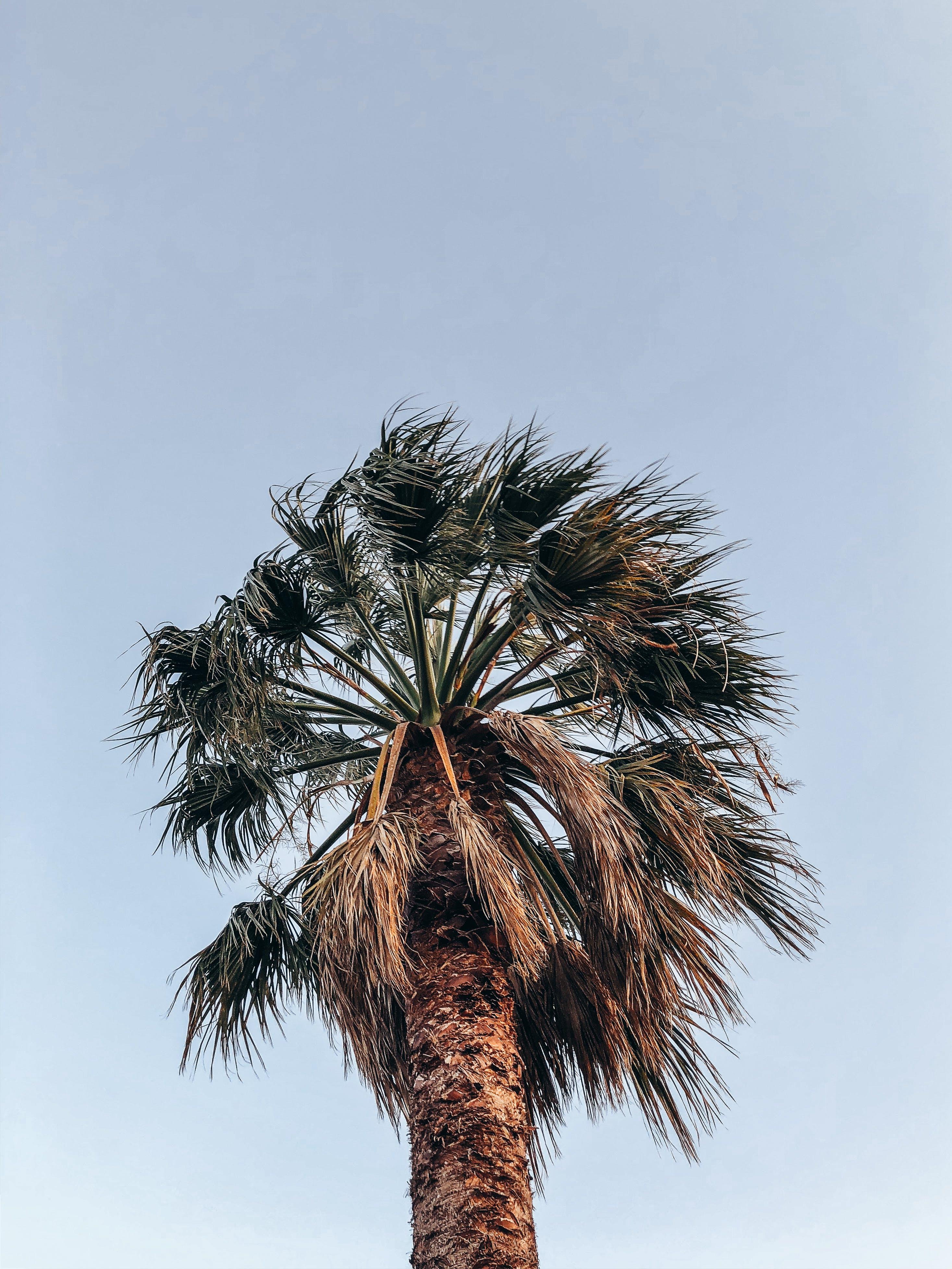 Gratis arkivbilde med himmel, klar himmel, kokosnøttre, lav-vinklet fotografering