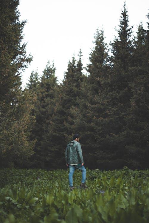 おとこ, ジャケット, パーカー, モミの木の無料の写真素材