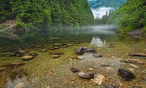 Бесплатное стоковое фото с вода, деревья, дикая природа, камни
