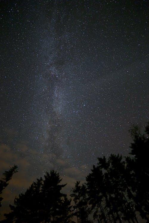 bäume, beleuchtung, himmel
