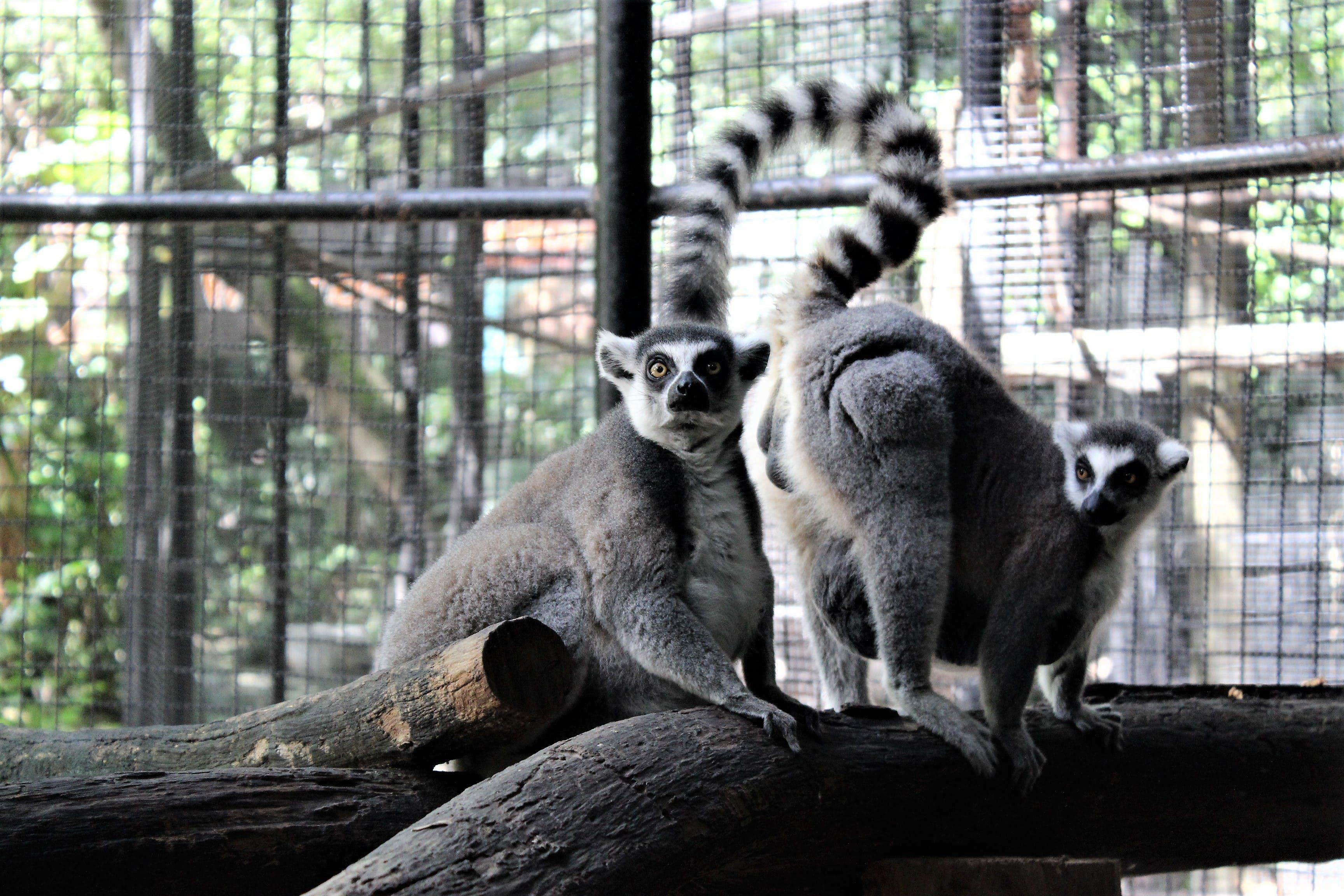 Free stock photo of animal photography, Bangkok, candid, safari