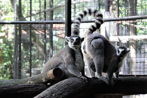 Ingyenes stockfotó állatfotók, állatkert, Bangkok, őszinte témában