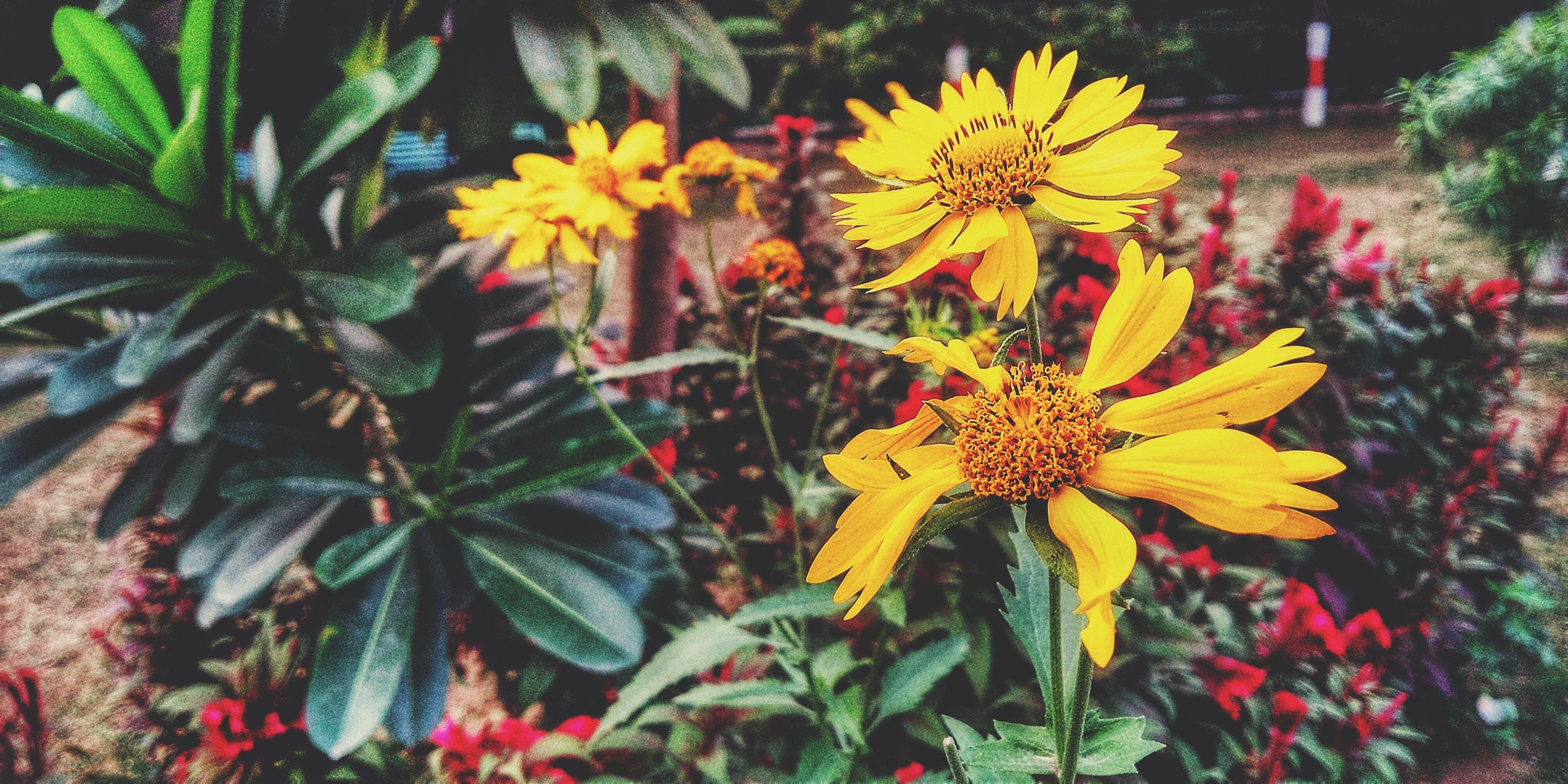 Δωρεάν στοκ φωτογραφιών με #mobilechallenge, #nature #fhotography, #κίτρινος, #λουλούδι