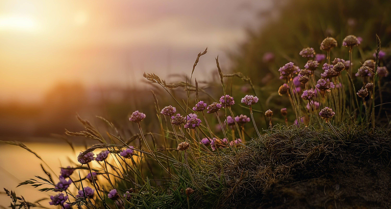Foto d'estoc gratuïta de brillant, colors, creixement, flor