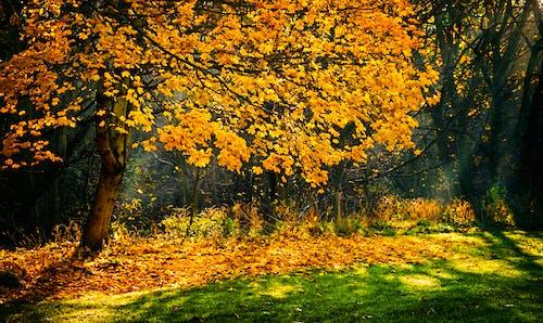 Photograph of Trees during Autumn Season