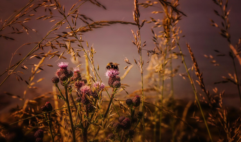 คลังภาพถ่ายฟรี ของ การเจริญเติบโต, กำลังบาน, ดอกไม้, พฤกษา