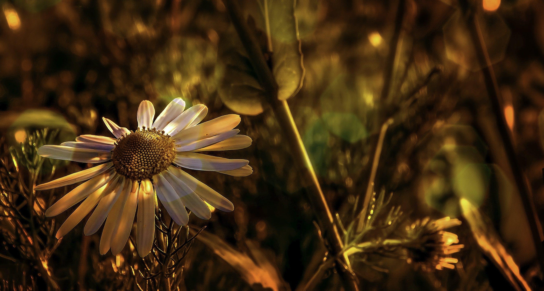 Kostenloses Stock Foto zu blumen, blüte, blütenblätter, farben